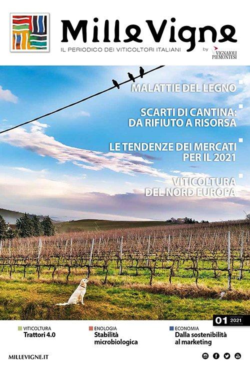 La copertina di Millevigne 01/2021, la prima edizione della rivista per i viticoltori italiani tutto al femminile. Intervista di Katrin Walter - simply walter