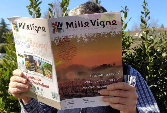 Uomo che legge la rivista dei viticoltori italiani. Foto: Monica Massa per l'intervista di Katrin Walter di simply walter