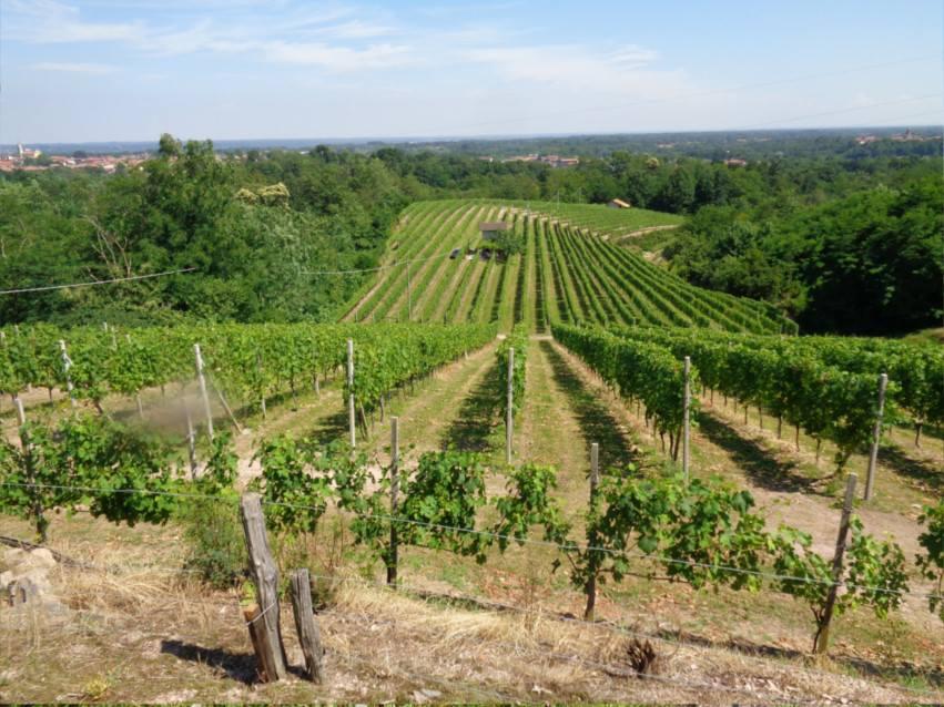 Si vede il vigneto dove Renzo Duella produce le uve per il vino Boca doc di Alto Piemonte