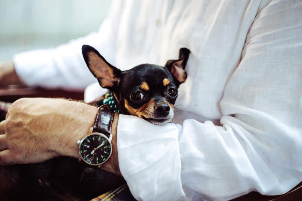 Viaggiare e soggiornare negli Hotel di lusso con il proprio cane è l'idea di Nathalie Schreiner. Foto per l'articolo freelance eccezionale di simply walter - Katrin Walter