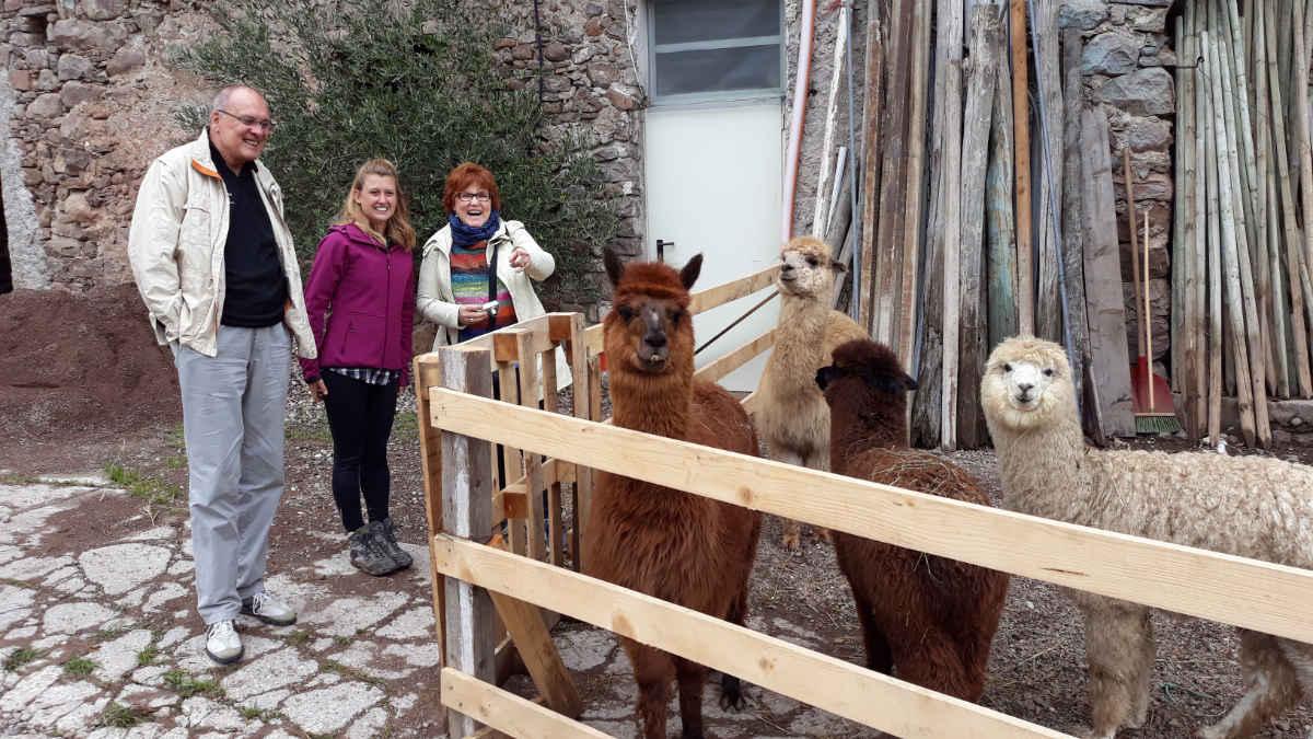 Silpaca, trekking con Alpaca in Val di Cembra con Ilaria Baldo e 4 dei sue Alpaca