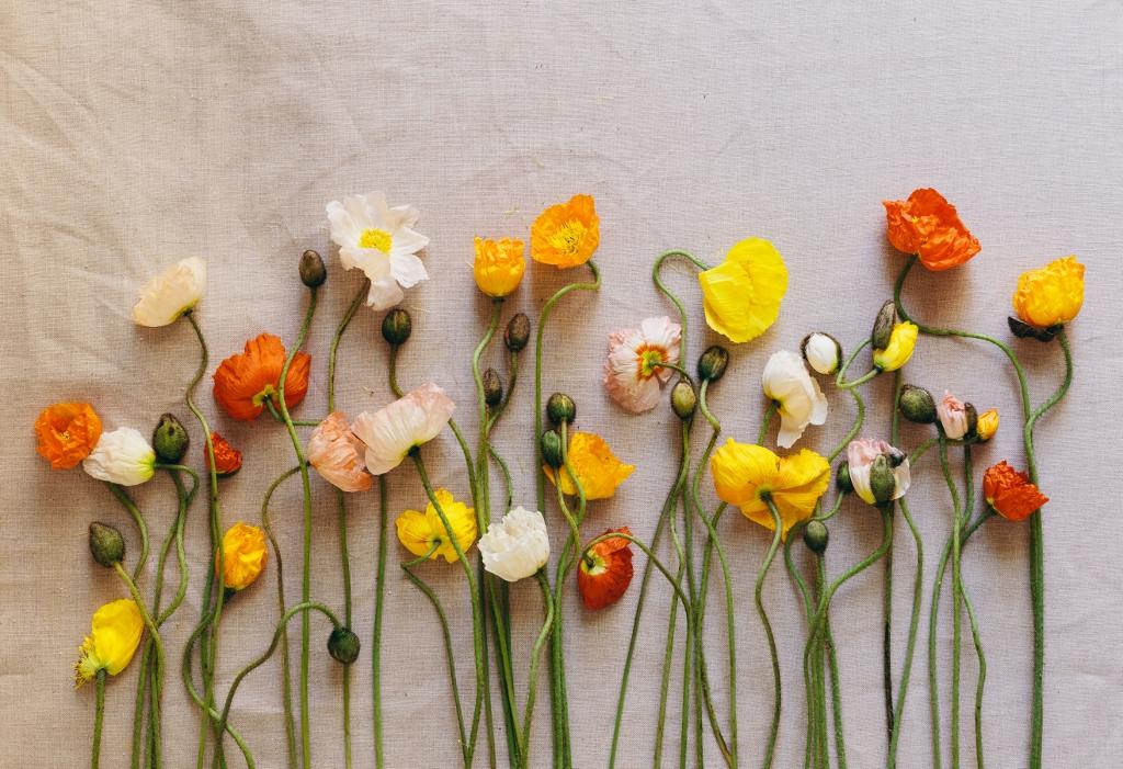 Un Bouquet di fiori con Anemoni hupehensis, in cui si trovano anche dei fiori arancioni, il colore di Bettina Roeder, qui non nel vaso ma in una collocazione proprio grafica: un fiore accanto all'altro