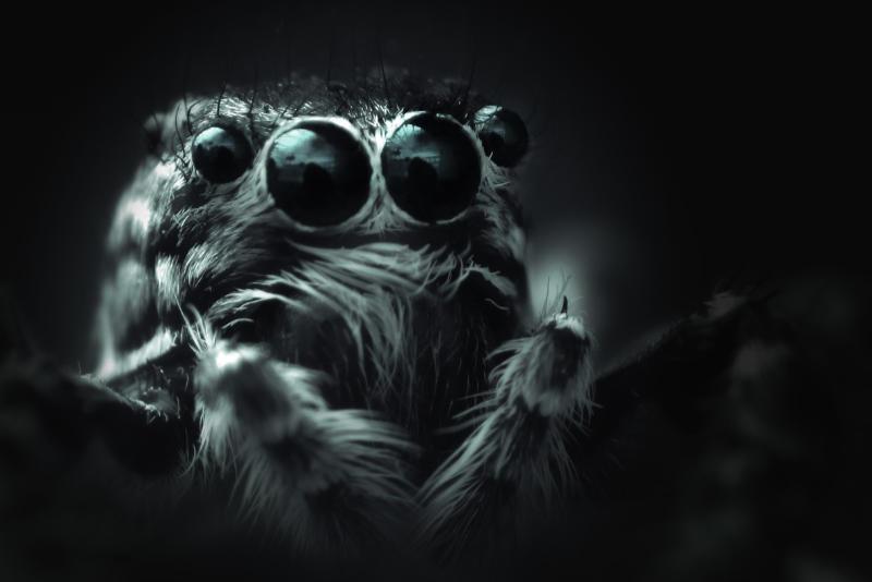 Nella foto un ragno grasso in b/n. Puoi anche vincere alla grande su internet se il web design e il contenuto corrispondono all'immagine. Katrin Walter – simply walter